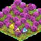 Die Rosa Rose – Vorbereitungen für den Valentinstag?