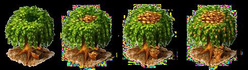 tulpguldenbaum