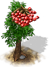 vogelbeerbaum_icon_big