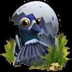 Haustier-Taube