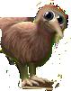 kiwi-vogel-3